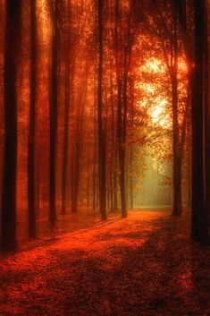 rays of sunlight path in the autumn park Beautiful Nature Wallpaper, Beautiful Landscapes, Fall Pictures, Nature Pictures, Beautiful World, Beautiful Images, Landscape Photography, Nature Photography, Autumn Scenes
