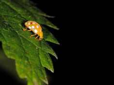 Orange ladybird by Steve Adams, via 500px