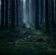 Beschenhof, Blackwood Forest, Germany