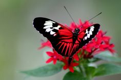 Butterfly Photography-13