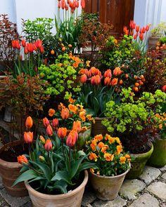 62 Ideas For Garden Patio Pots Spring Garden Yard Ideas, Love Garden, Garden Spaces, Garden Projects, Garden Pots, Backyard Ideas, Amazing Gardens, Beautiful Gardens, Pot Jardin