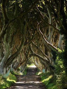 The Dark Hedges – County Antrim, Northern Ireland - Atlas Obscura Great Places, Beautiful Places, Places To Visit, Dark Hedges Ireland, Hedge Trees, Herb Garden Design, Forest Creatures, Traditional Landscape, Formal Gardens