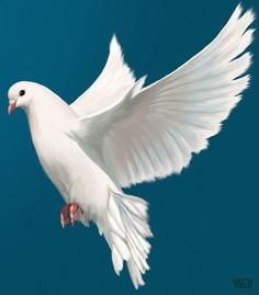 New white bird flying peace 17 Ideas – Bird Supplies Dove Flying, Bird Flying, Pretty Birds, Beautiful Birds, Dove Pictures, Beautiful Pictures, White Pigeon, Christian Artwork, Dove Bird