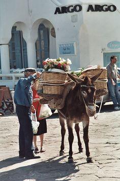 Mykonos Market - Equus asinus - Biquipedia, a enciclopedia libre Beautiful Beach Pictures, Beautiful Beaches, Cool Pictures, Old Time Photos, My Photos, Aesthetic Words, Color Psychology, Greek Islands, Zebras
