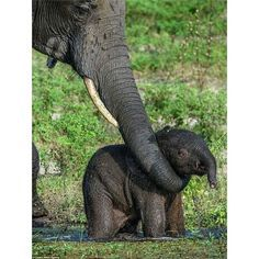 how it is possible to be so cute. .!! From :@elephants.daily - For info about promoting your elephant art or crafts send me a direct message @elephant.gifts or emailelephantgifts@outlook.com . Follow @elephant.gifts for inspiring elephant images and videos every day! . . #elephant #elephants #elephantlove