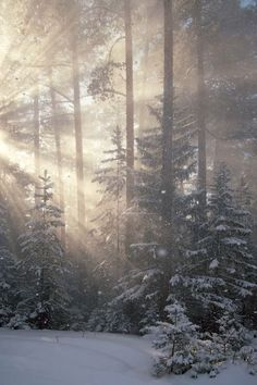 Trendy Ideas For Nature Forest Winter Mists Winter Szenen, Winter Magic, Winter Trees, Snowy Trees, Snow Scenes, All Nature, Winter Pictures, Images Of Winter, Holiday Images