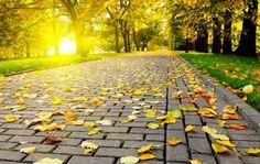 Perfetto Vita ...: Το Φθινόπωρο έχει και τα καλά του
