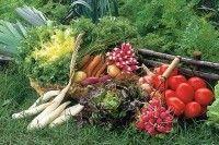Légumes et potager - Rotation des cultures - Que faire après chaque récolte ?