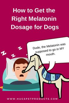 Get The Right Melatonin Dosage for Dogs. HINT: Don't accidentally take it yourself .make sure it's after your dog is settled for the night. Pet Care Tips, Dog Care, Can Dogs Eat, I Love Dogs, Melatonin For Dogs, Tortoise As Pets, Meds For Dogs, Dog Health Care, Health Tips