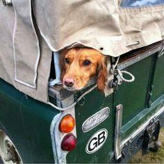 #defender #defender90 #defender110 #defenderitalia #heritage #defender_life_style #defender_for_ever #offroad #4x4 #landrover #landlovers #landroveritalia #searchandrescue #landroverdefender #picoftheday #defenderlove #td5 #td4 #ilovelandrover #leggenda #offroaditalia #offroadlife #extreme #dogs #puppy #beagle #lagotto #dogstagram #puppylove #defenderdogs @land_rover_series_pics by _defenderdogs_ #defender #defender90 #defender110 #defenderitalia #heritage #defender_life_style…