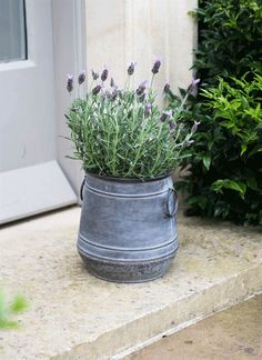This planter exudes timeless elegance in any garden. Crafted from galvanised steel and designed to weather gracefully, this planter has a wonderfully antique appearance with vintage style handles.  Makes a stunning display planted up with your favourite blooms in striking colours, then place by a door, entranceway or on the terrace.