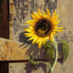 Just Plain COUNTRY CHARM... A little sunshine...by Camille Engel