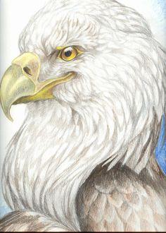"""""""Eagle"""" par VixieArts"""