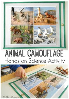 If your kiddos are interested in learning about animals, this Animal Camouflage Hands-on Science Activity will sure to delight!