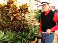 Making Compost Tea And Applying It