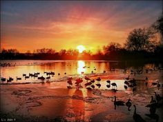 Waterfowl haven