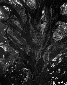Takeshi Shikama - Silent Respiration of Forests