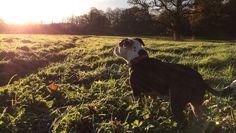 Beautiful #Northumberland. Dog holidays with Barking Mad.