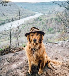 Wilderness Dog (i.redd.it) submitted by GhostMonkeyInSpace to /r/dogswearinghats 1 comments original   - Cute Puppies - Pitbull - German Shepard - Golden Retriever - Beagle - Bulldog - Chihuahua - English Setter - Maltese - Pug - Rottweiler - Wells Terrier - Shihtzu - Labrador - Husky - Vizsla Puppy Breeds - Pets in Clothes - Animal Training Pictures