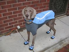 This Weim has more expensive running clothes than me! Just Sayin'