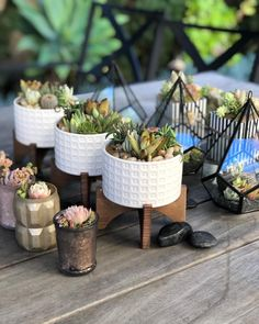 I have enough succulents said no one ever. Made with by using Succulent Favors, Bloom Where You Are Planted, Terrarium Plants, Cacti And Succulents, Go Green, Home Interior, Decoration, House Plants, Cactus