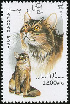 Afghanistan 1996 Cat Stamps - Somali