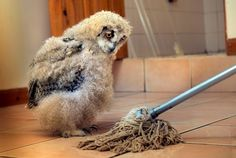 Baby Owl And Mop Are BFFs