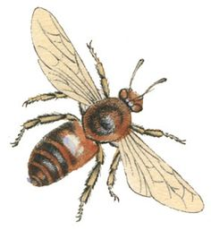 *The Graphics Fairy LLC*: Instant Art Printable - Lovely Bees - Natural History