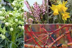 10 plantes vivaces d'ombre pour composer un massif - Promesse de Fleurs Anemone Du Japon, Geranium Vivace, Paradis, Plants, Shade Garden Plants, Perennials, Beautiful Gardens, Plant, Planets