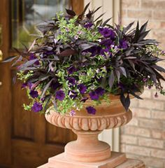 container gardening ideas   Container Gardening