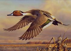 Evening Flight-2013 Ohio Duck Stamp by Adam Grimm