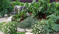 Vegetables mixed with herbs and natives makes a powerful and lush space.