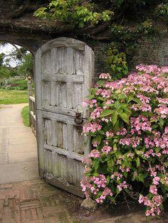 I probably can't pull off the rustic door but what about the big burst of pink in the guardian bush?
