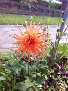 coolest flower ever ! :o...