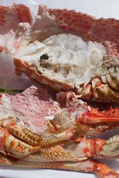 Wolfgang Tillmans Astro Crusto as seen at the Tate Modern last year in London. He won the Turner Prize in 2000 but this show was far more expansive and this image of half-consumed crab legs with a fly (decomposition?) still haunts me. A Level Photography, Food Photography Styling, Food Styling, Paul Outerbridge, Contemporary Photography, Abstract Photography, Wolfgang Tillman, Lobster Recipes, Photography Exhibition