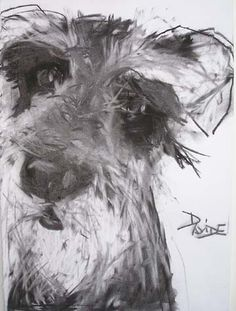 'Rafferty' Open Edition Print by Valerie Davide' & mounted & Framed (Obeche Limed Wax or Matte Black Finish) Animal Paintings, Animal Drawings, Art Drawings, Drawing Faces, Cartoon Drawings, Art And Illustration, Art Illustrations, Character Illustration, Schnauzer Art