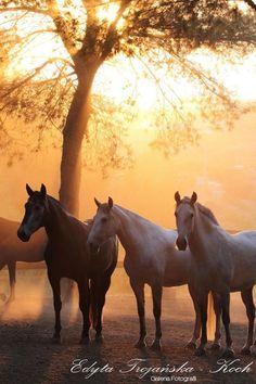 morning at the ranch