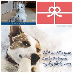 c062375b2a 127 Best Shop BC SPCA images