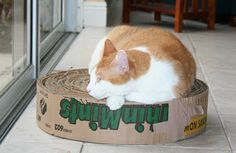 Recycled Cookie boxes into scratching circles for cats and then donate to local animal shelter.