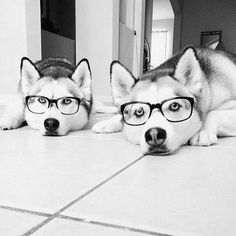 perros hipster