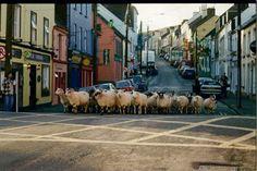 Dingle Ireland, reminded me of Seaside OR.