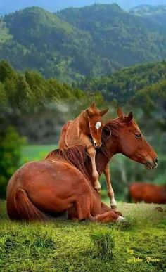 Horse and foal wanting loving. Pretty sure I have seen this horse photo and it is edited here added to green mountain meadow.