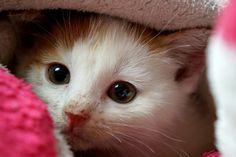 #cat #kat #poes #kitten #cute #adorable #schattig