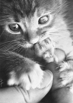 82 Beste Afbeeldingen Van Kleurplaten Katten In 2018 Animal