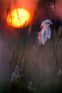 evening meadow by Daniel Eggert on 500px.com