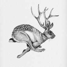 On behance - jackalope sketch Gravure Illustration, Illustration Art, Creative Illustration, Rabbit Tattoos, Paper Mache Sculpture, Arte Horror, Watercolor Animals, Mythical Creatures, Spirit Animal