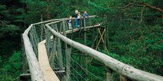 Landmark Forest Adventure Park, Carrbridge A family on a wooden treetop walkway at Landmark Forest Adventure Park