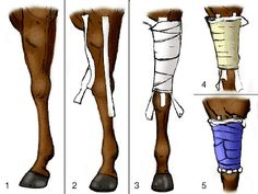 Wrap or Bandage the Forearm – Horses Horse Braiding, Horse Anatomy, Horse Care Tips, Horse Facts, Western Riding, Show Horses, Equestrian, Horse Stuff, Livestock