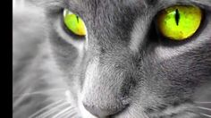 Photo of glowpaw for fans of Waterclan (warrior cats). Warrior Cats, Warrior Cat Names, Funny Kittens, Cute Cats And Kittens, Pretty Cats, Beautiful Cats, Pretty Kitty, Foto Fantasy, Animal Gato