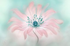 Pastel by Jacky Parker on 500px